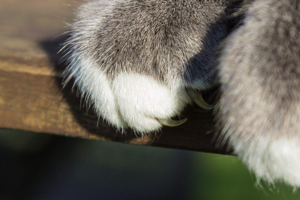 Tapeten Katzen Tapeten für Katzen kratzfeste Tapete Tapeten kleben