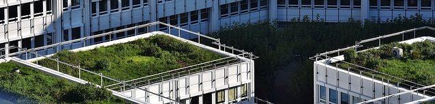 Dachbegrünung Kosten begrüntes Dach